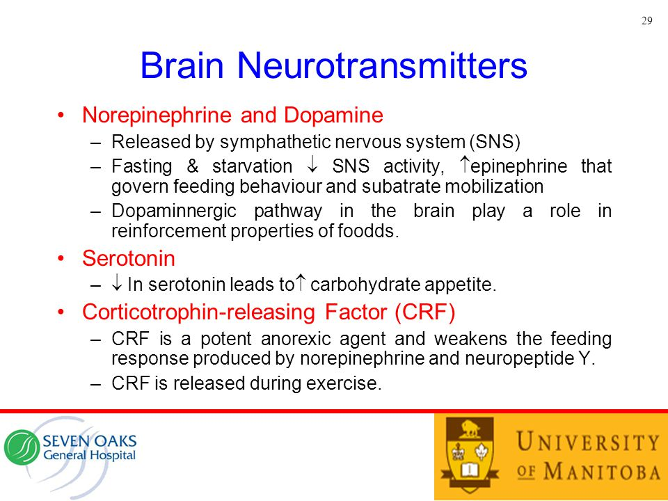 Brain Neurotransmitters