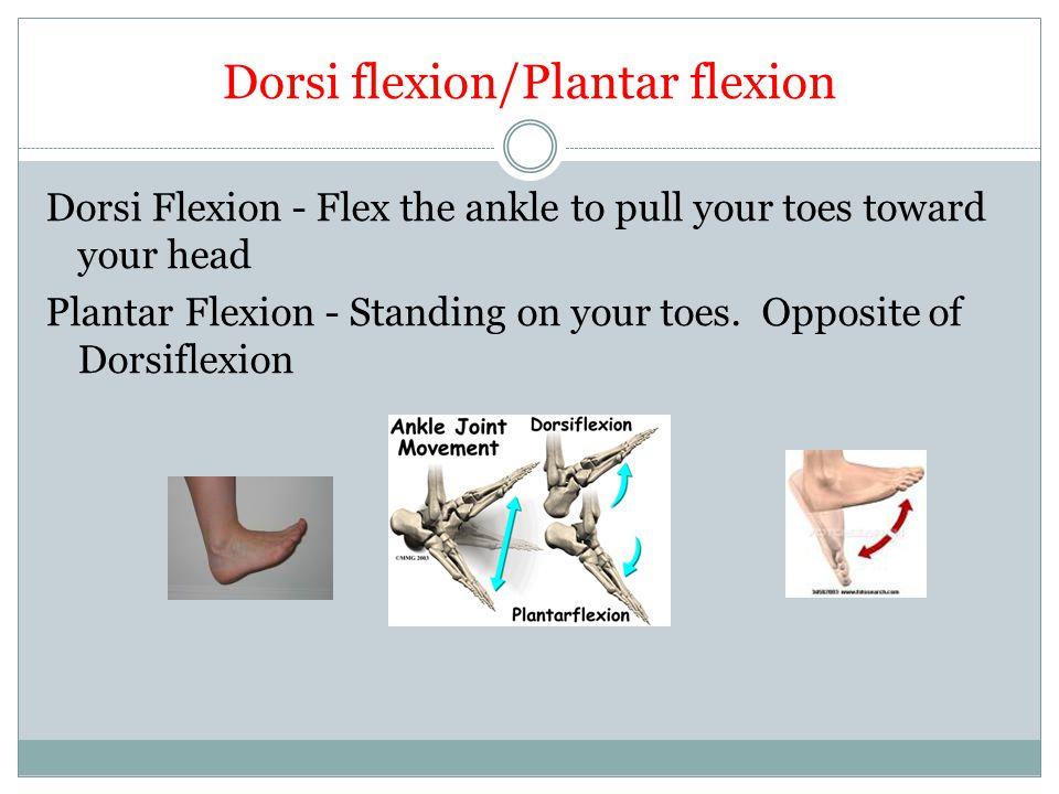 Dorsi flexion/Plantar flexion