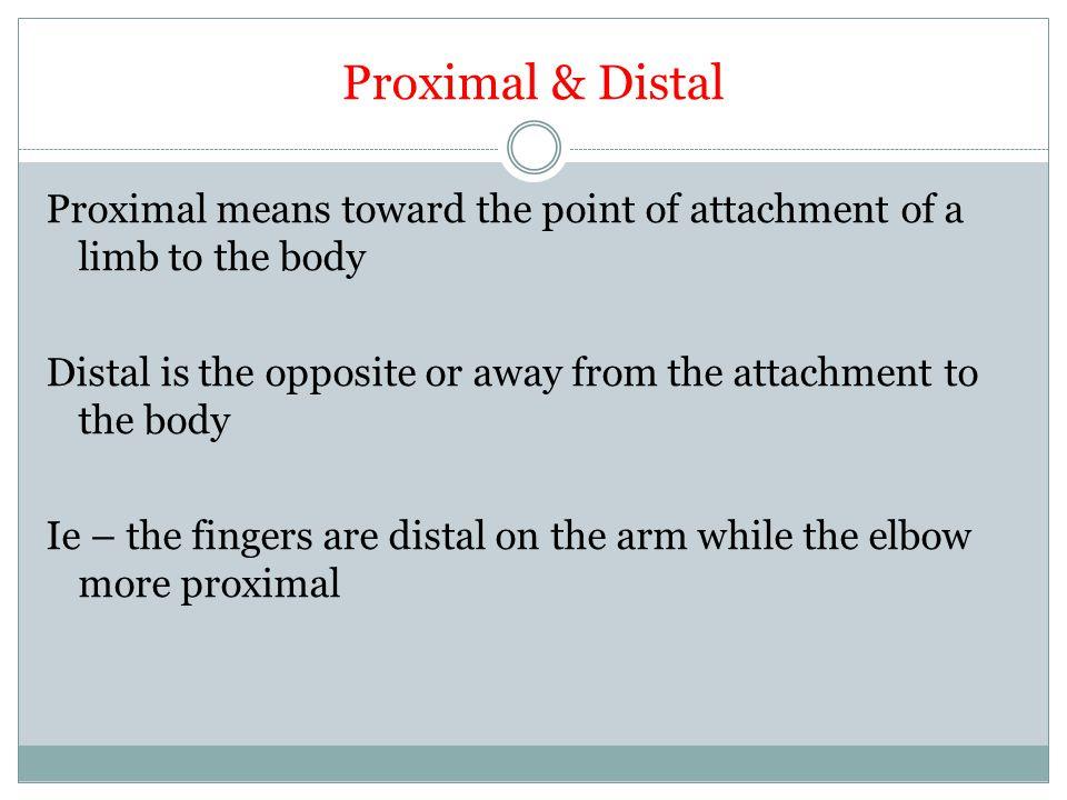 Proximal & Distal