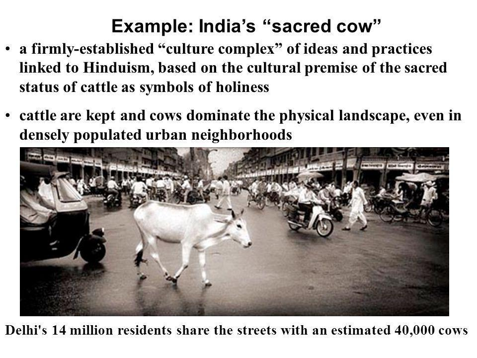 Example: India's sacred cow