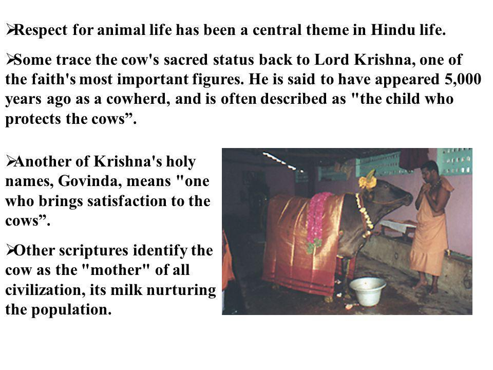 Respect for animal life has been a central theme in Hindu life.