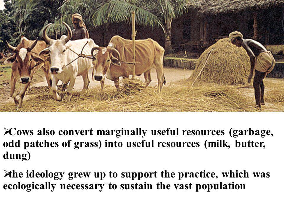 Cows also convert marginally useful resources (garbage, odd patches of grass) into useful resources (milk, butter, dung)