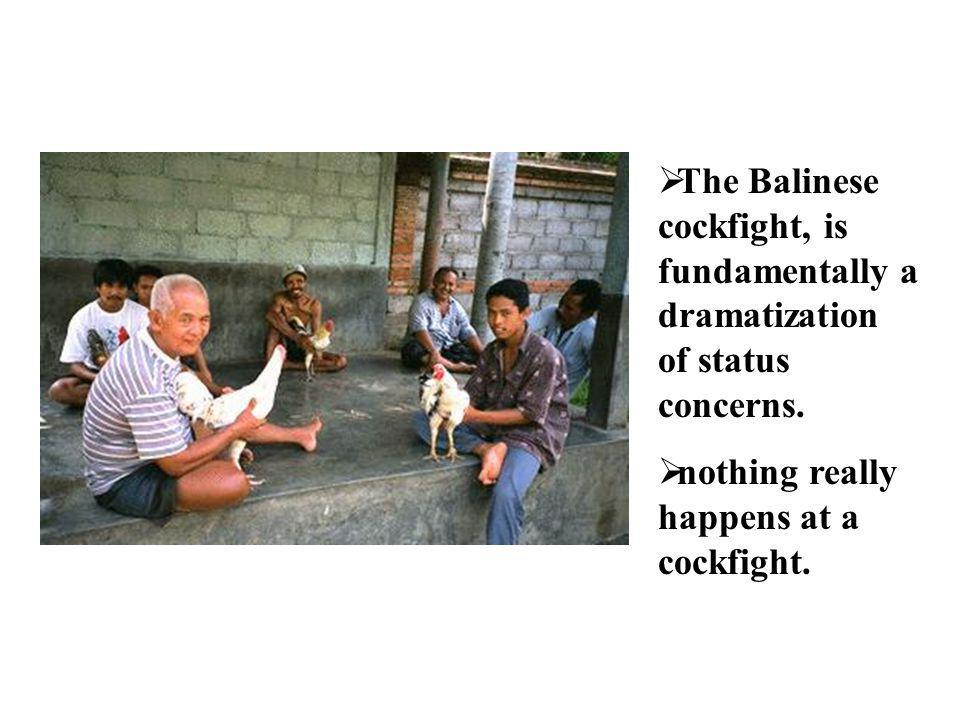 The Balinese cockfight, is fundamentally a dramatization of status concerns.