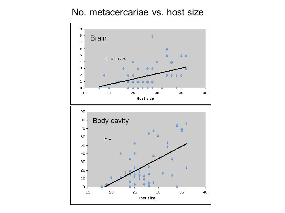 No. metacercariae vs. host size