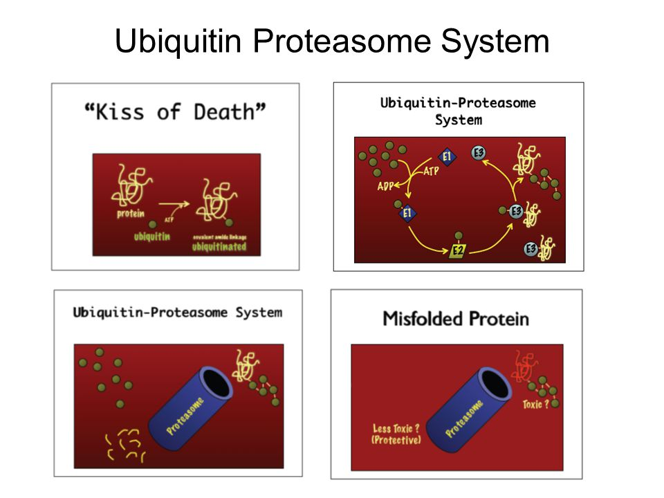 Ubiquitin Proteasome System
