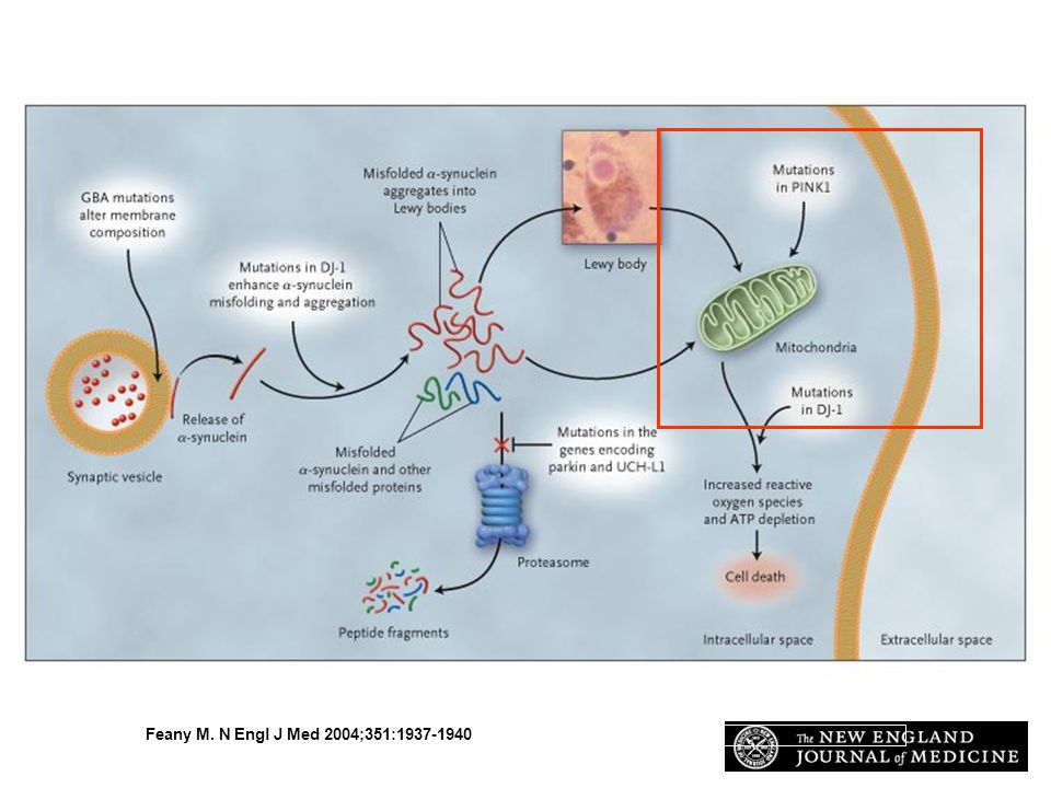 Speculative Model of the Interactions among Proteins Implicated in Parkinson s Disease