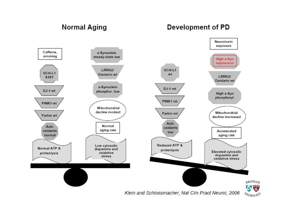 A model of known pathogenetic events in PD shows a principal imbalance between factors that promote PD (e.g.