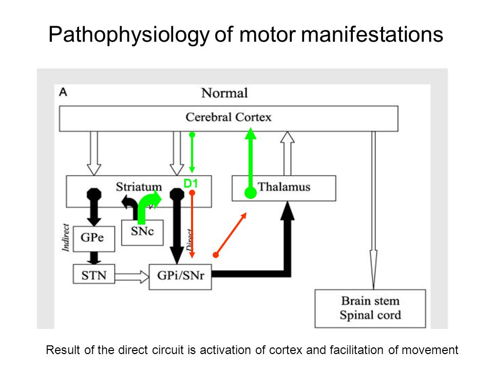Pathophysiology of motor manifestations