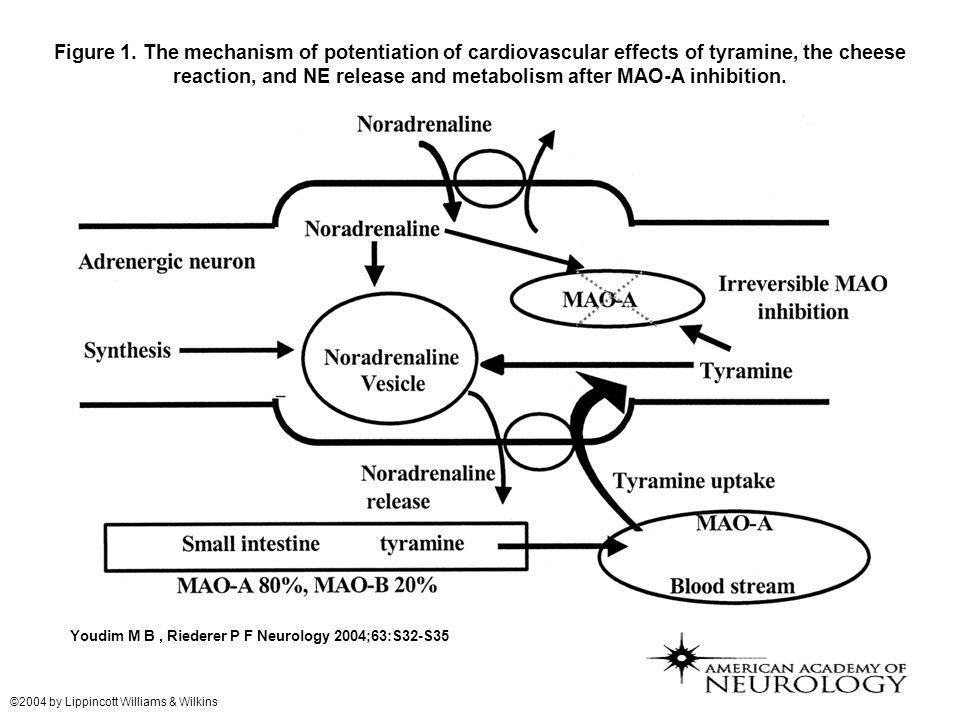 Figure 1. The mechanism of potentiation of cardiovascular effects of tyramine, the cheese reaction, and NE release and metabolism after MAO-A inhibition.