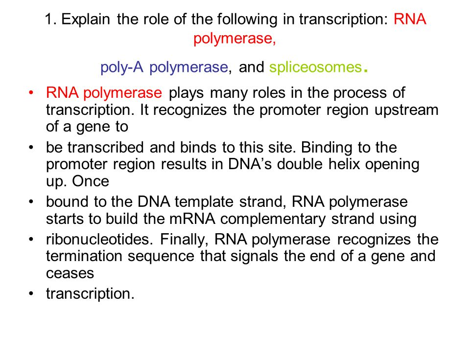 1. Explain the role of the following in transcription: RNA polymerase, poly-A polymerase, and spliceosomes.