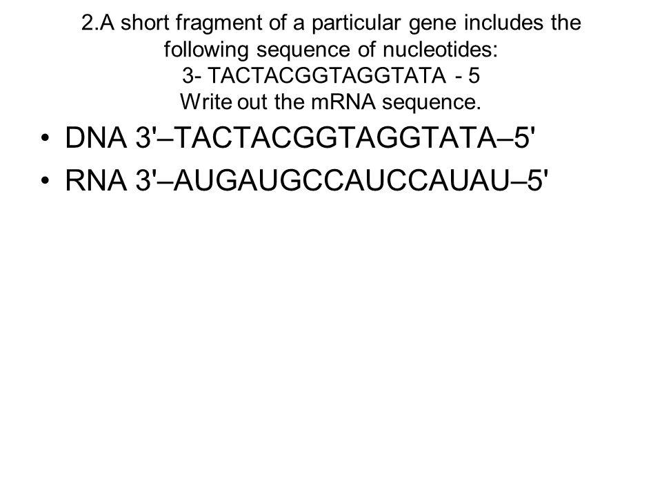 DNA 3 –TACTACGGTAGGTATA–5 RNA 3 –AUGAUGCCAUCCAUAU–5