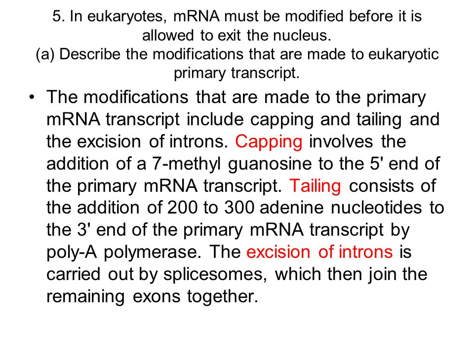 5. In eukaryotes, mRNA must be modified before it is allowed to exit the nucleus. (a) Describe the modifications that are made to eukaryotic primary transcript.