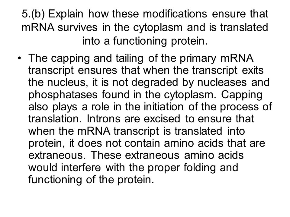 5.(b) Explain how these modifications ensure that mRNA survives in the cytoplasm and is translated into a functioning protein.