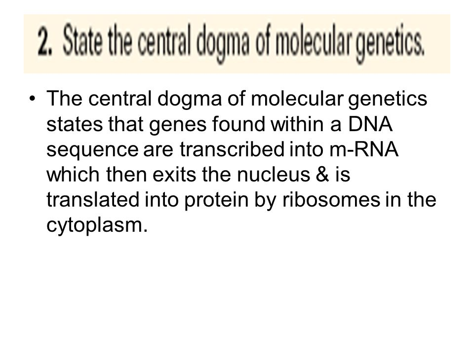 The central dogma of molecular genetics states that genes found within a DNA sequence are transcribed into m-RNA which then exits the nucleus & is translated into protein by ribosomes in the cytoplasm.