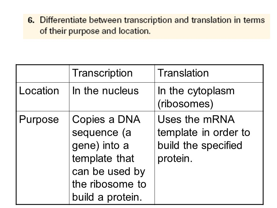 Transcription Translation. Location. In the nucleus. In the cytoplasm (ribosomes) Purpose.