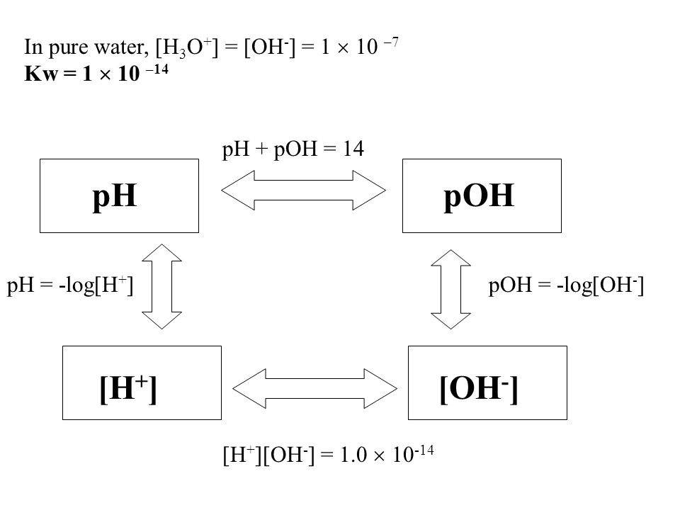pH pOH [H+] [OH-] In pure water, [H3O+] = [OH-] = 1  10 –7