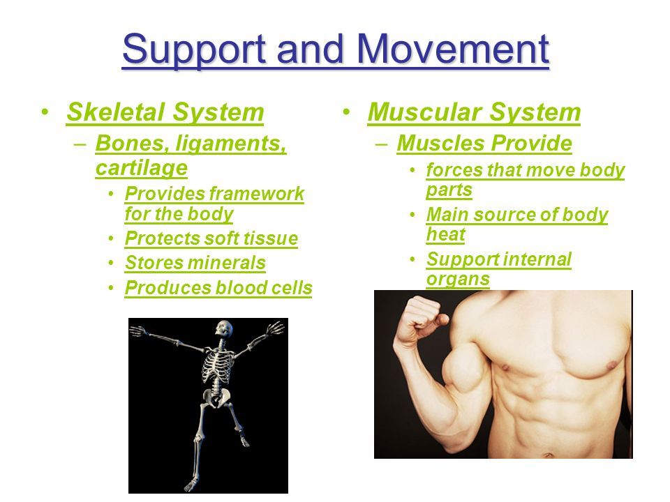 Support and Movement Skeletal System Muscular System