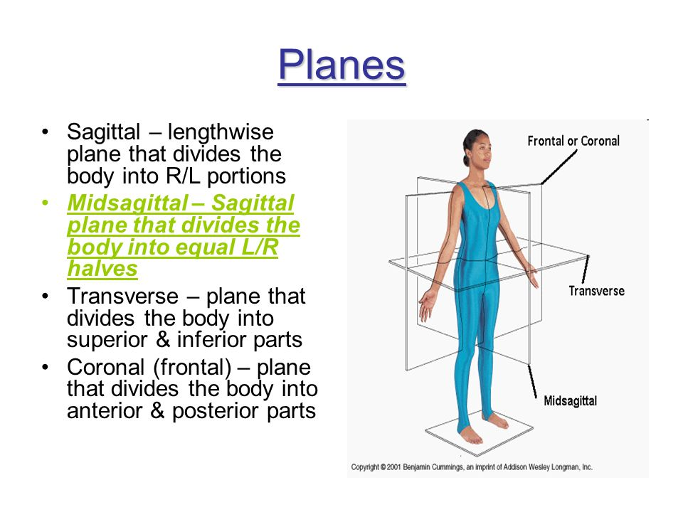 Planes Sagittal – lengthwise plane that divides the body into R/L portions. Midsagittal – Sagittal plane that divides the body into equal L/R halves.
