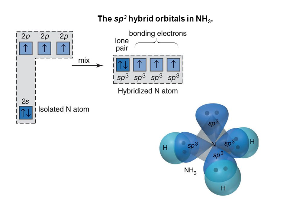 The sp3 hybrid orbitals in NH3.