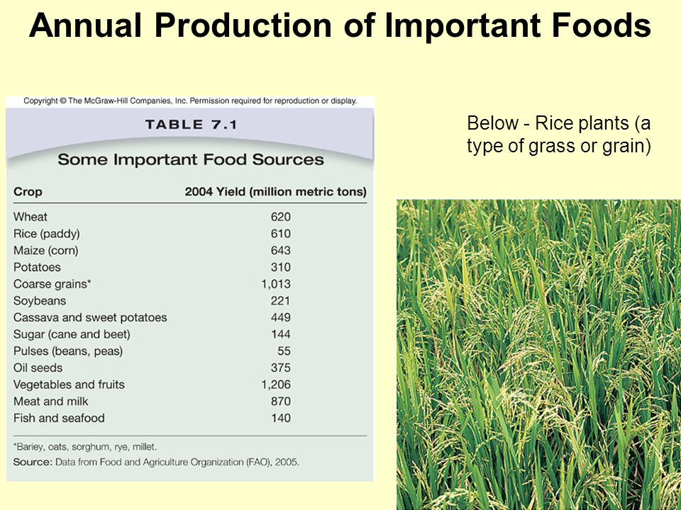Annual Production of Important Foods