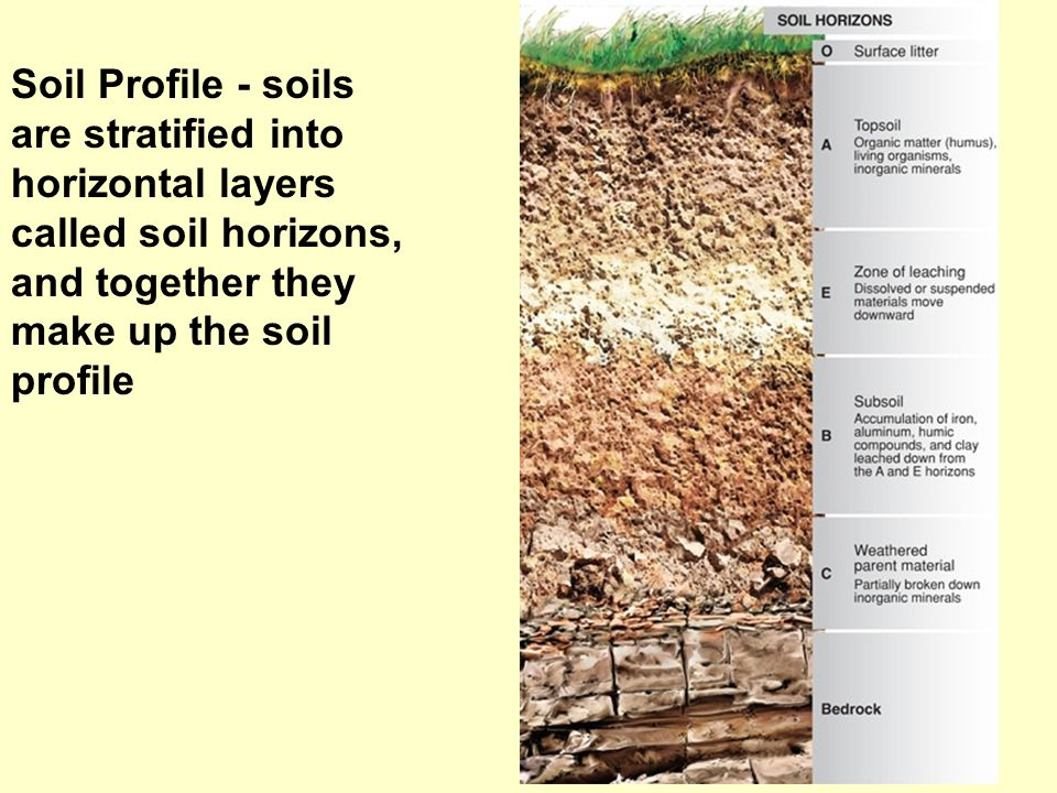 Soil Profile - soils are stratified into horizontal layers
