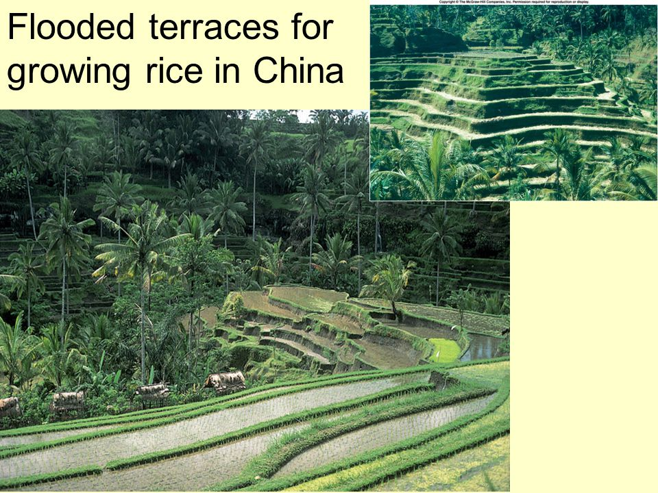 Flooded terraces for growing rice in China