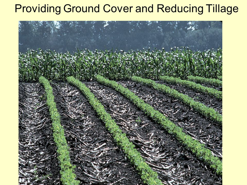 Providing Ground Cover and Reducing Tillage
