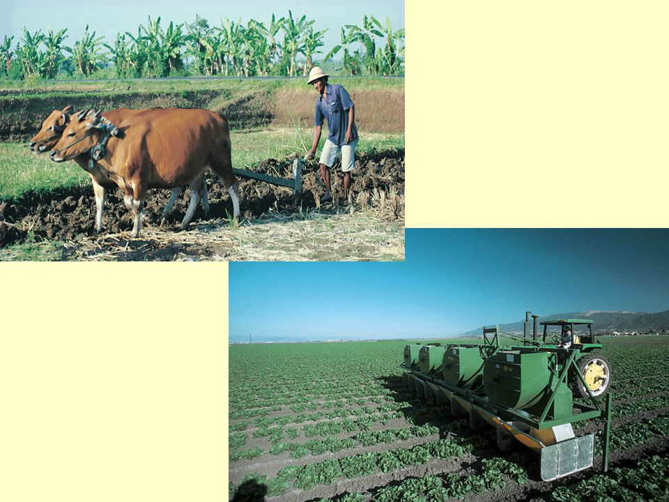 Note the contrast in how the farmers tend their fields in these two pictures.