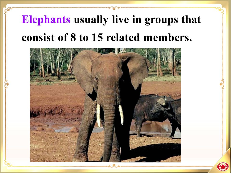 Elephants usually live in groups that