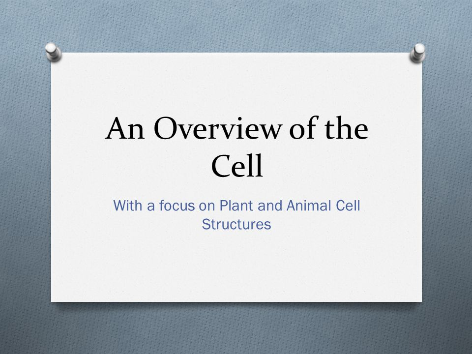 With a focus on Plant and Animal Cell Structures