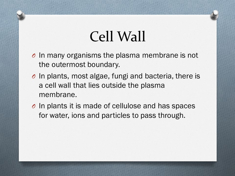 Cell Wall In many organisms the plasma membrane is not the outermost boundary.
