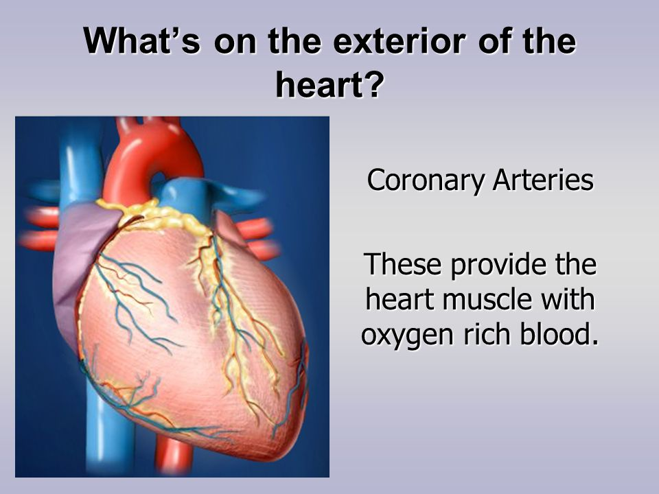 What's on the exterior of the heart