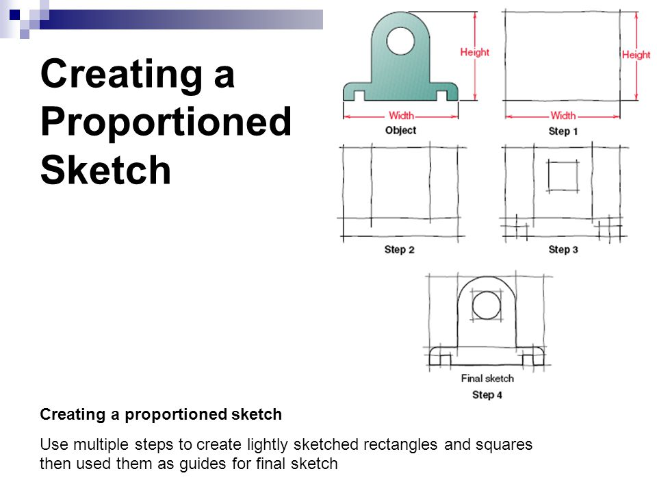 Creating a Proportioned Sketch