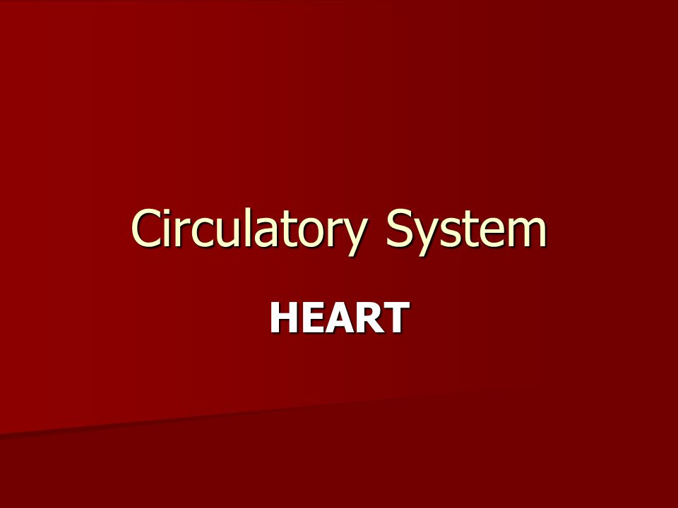 Circulatory System HEART