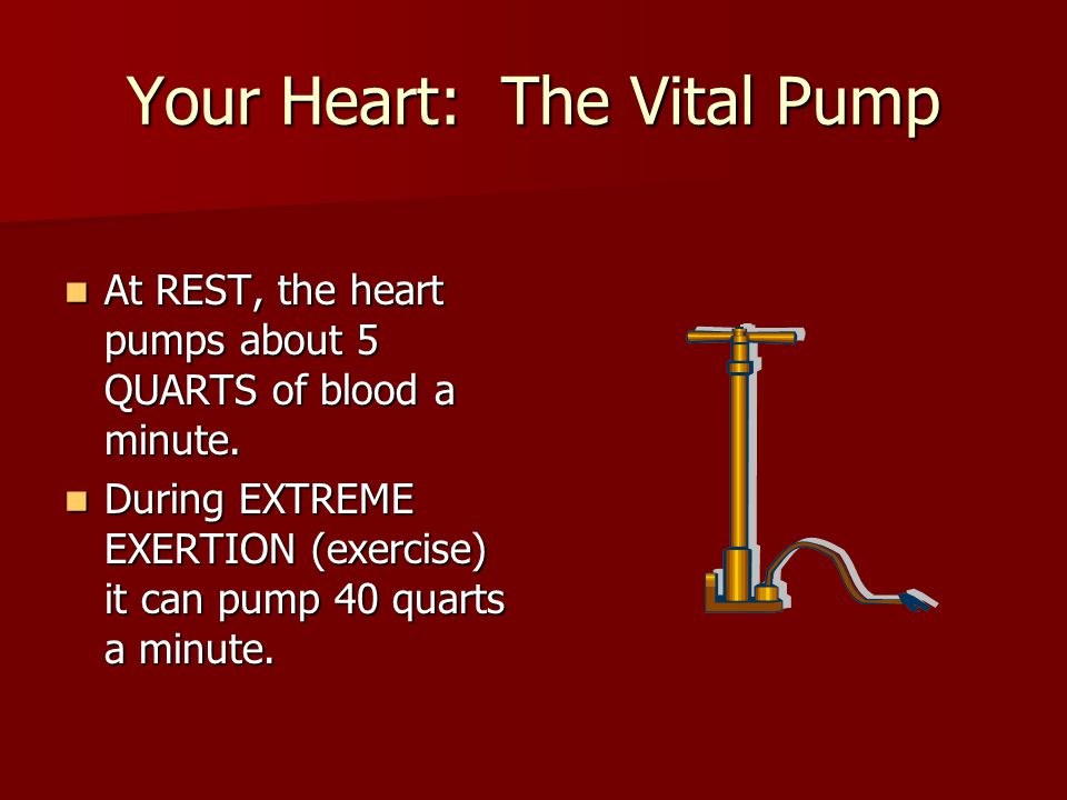 Your Heart: The Vital Pump