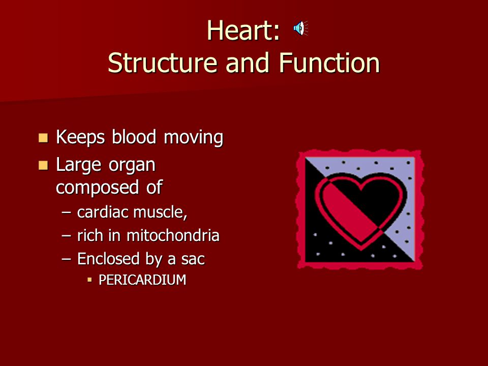 Heart: Structure and Function