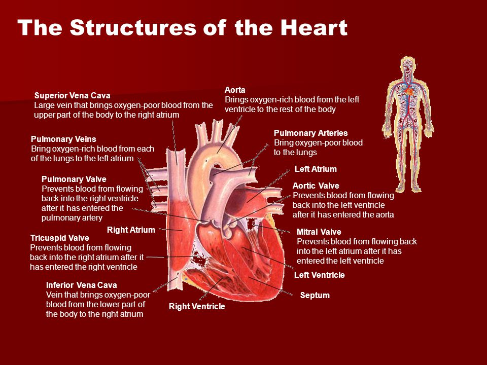 The Structures of the Heart