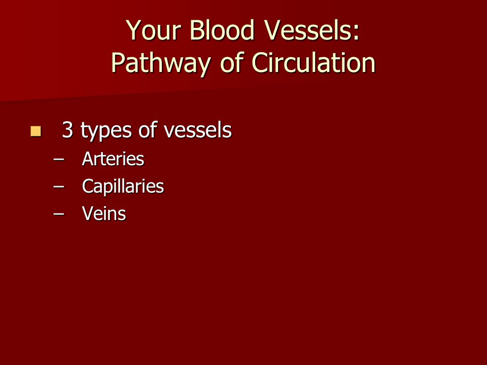 Your Blood Vessels: Pathway of Circulation