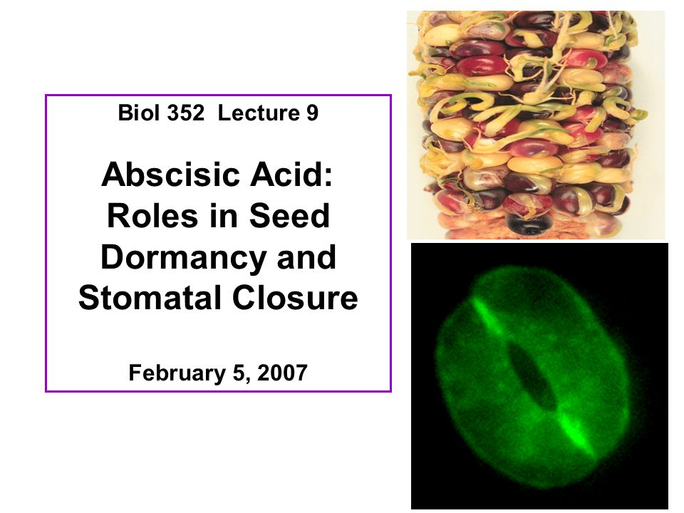 Roles in Seed Dormancy and Stomatal Closure