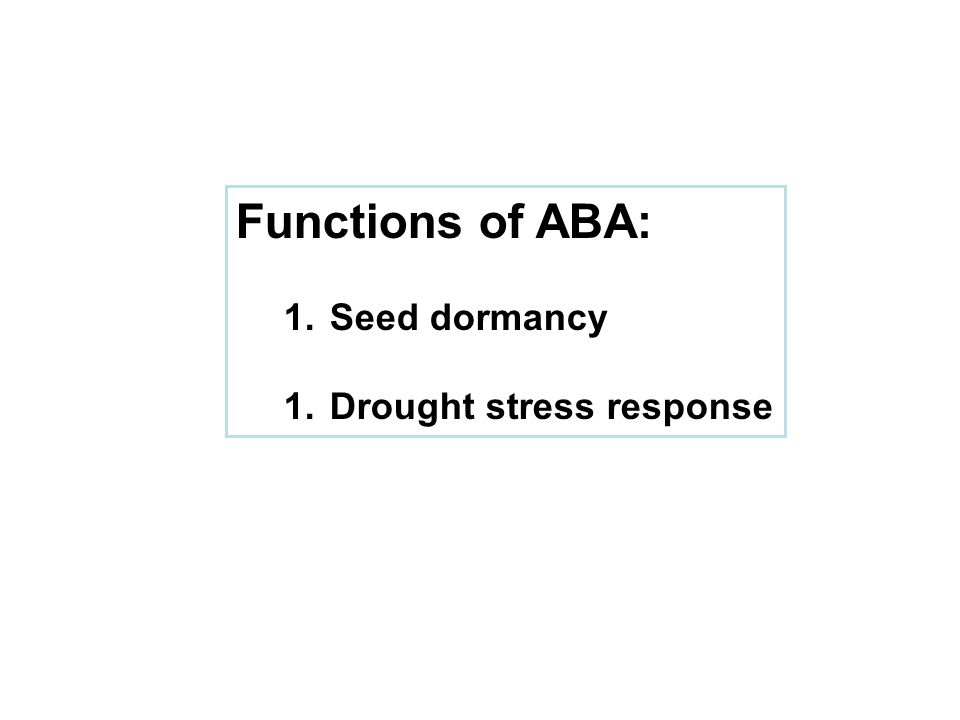 Functions of ABA: Seed dormancy Drought stress response
