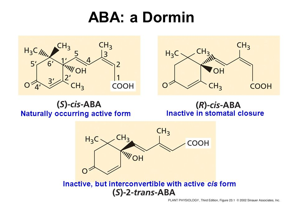 ABA: a Dormin Naturally occurring active form