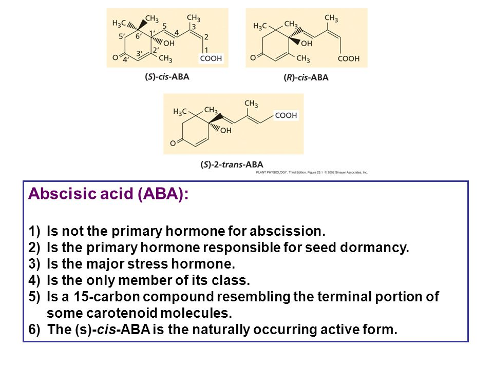 Abscisic acid (ABA): Is not the primary hormone for abscission.