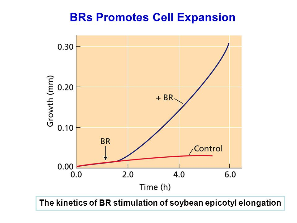 BRs Promotes Cell Expansion