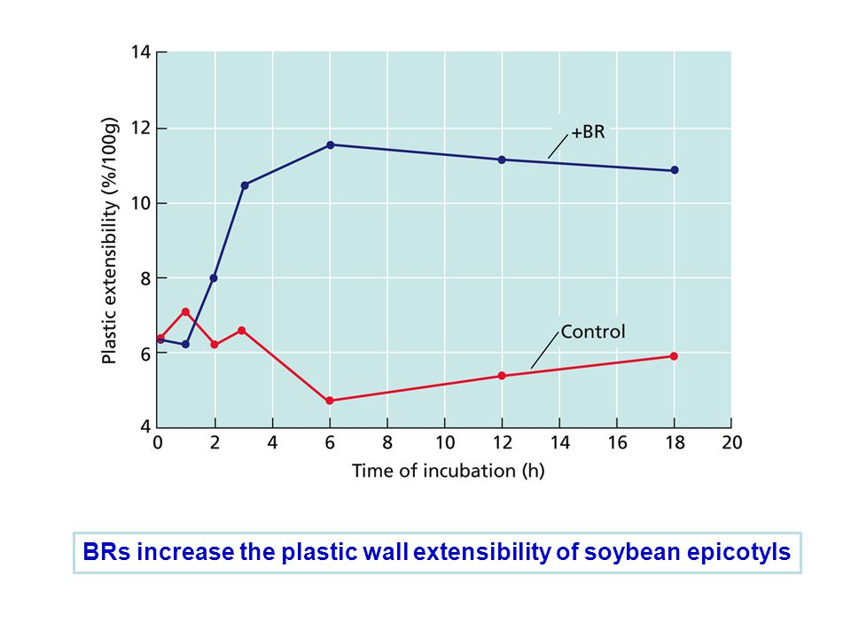 BRs increase the plastic wall extensibility of soybean epicotyls