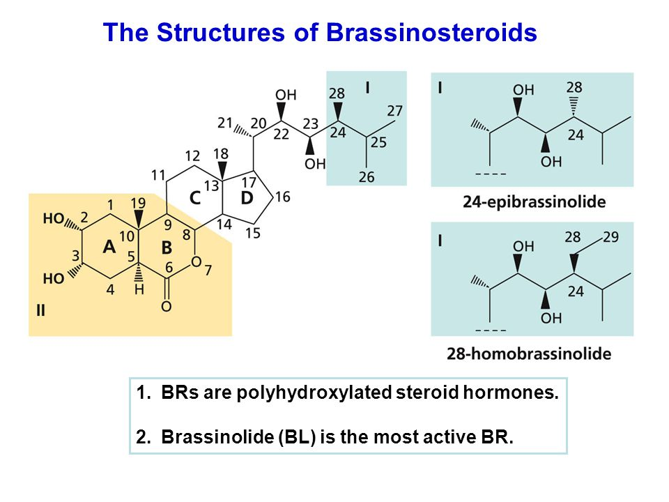 The Structures of Brassinosteroids