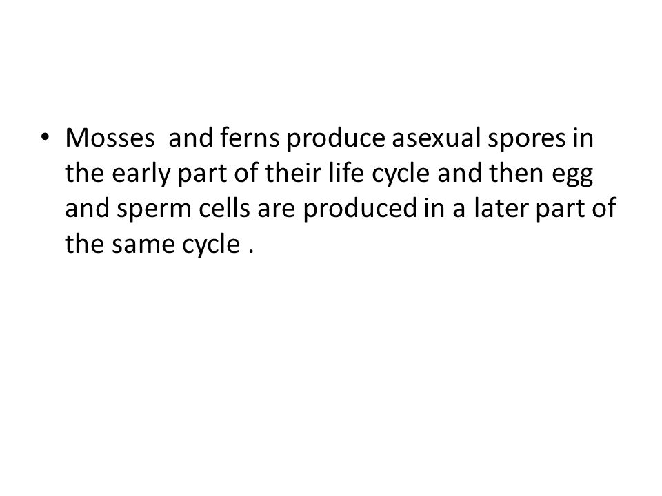 Mosses and ferns produce asexual spores in the early part of their life cycle and then egg and sperm cells are produced in a later part of the same cycle .