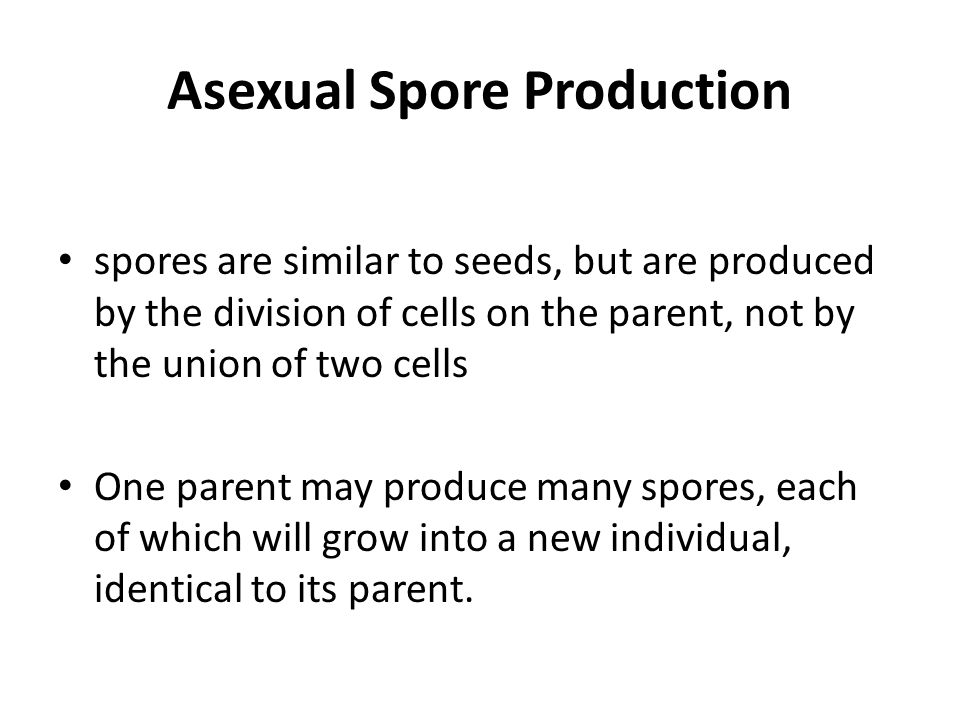 Asexual Spore Production