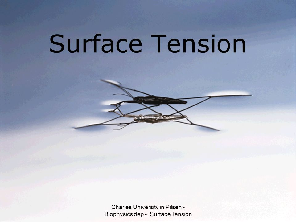 Charles University in Pilsen - Biophysics dep - Surface Tension