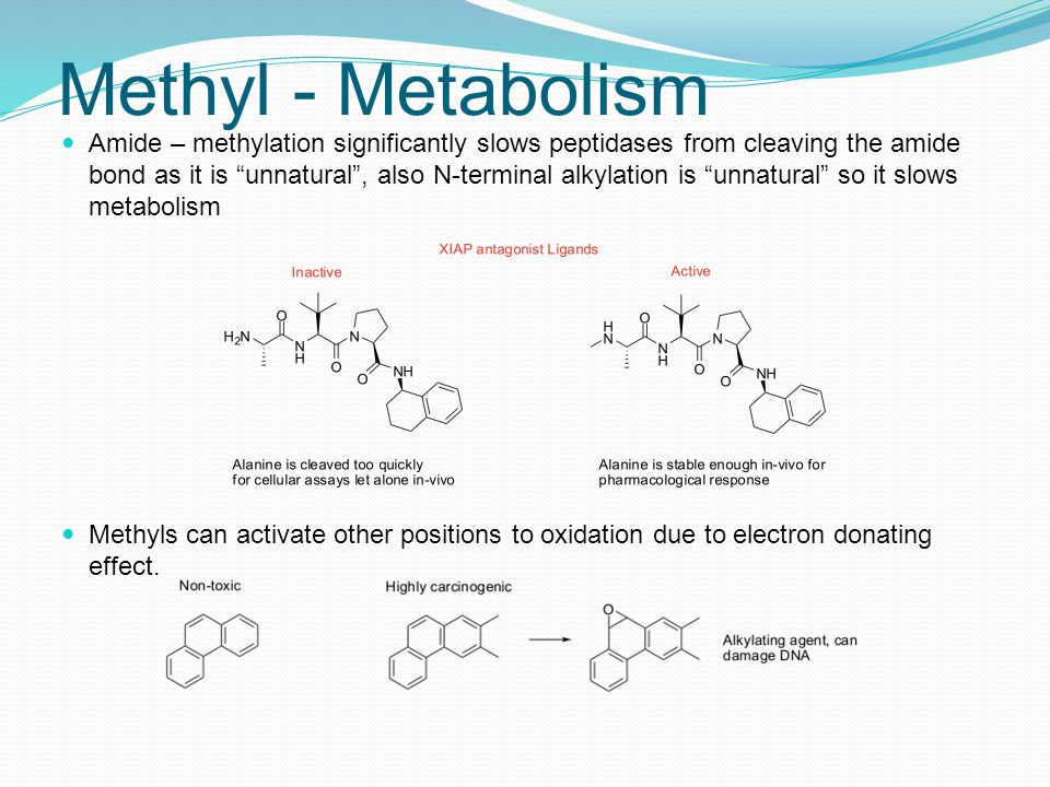 Methyl - Metabolism