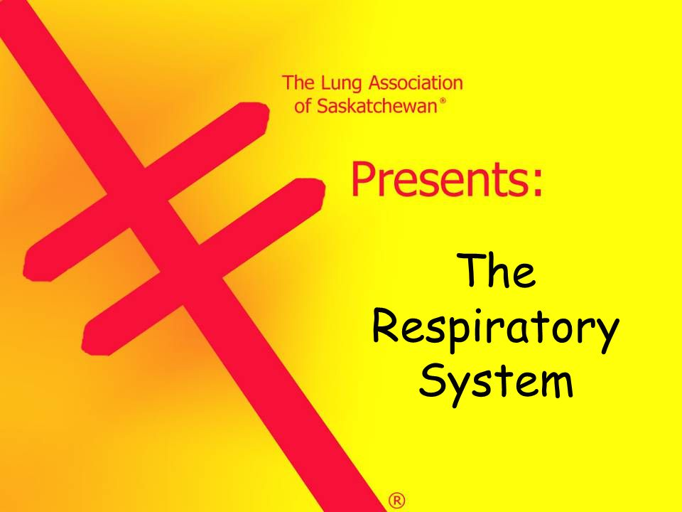 The Respiratory System (5)